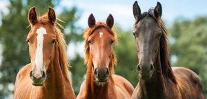 probiotyk dla koni żywe kultury  suplement odzywka konno stadnina odporność  stadnina koni konie probiotyk dla koni mikroorganizmy odżywka suplement eko-natural