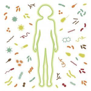 probiotyk MegaBioVit suplement diety na jelita i florę bakteryjną