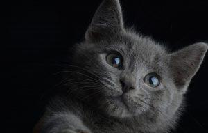 probiotyk suplement odżywka witaminy kota kociąt doktor animals